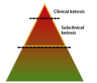 Wellion VET pyramid ketosis stages